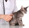 Ветеринарные клиники в Ефремове